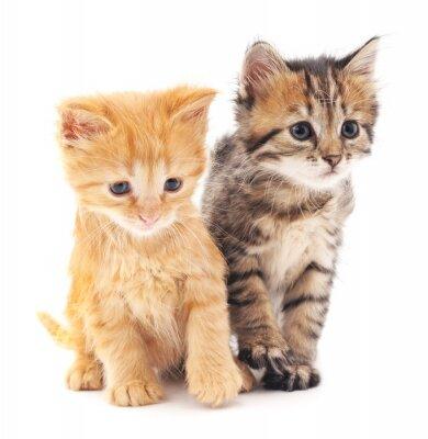 Poster Dois gatinhos.