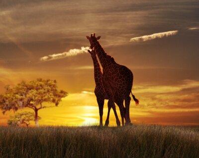 Poster Dois girafas no Sunset