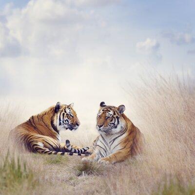 Poster dois tigres