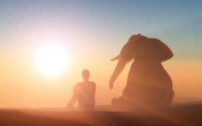 Poster Elefante e você