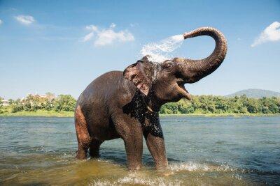 Poster Elefante, lavando, rio