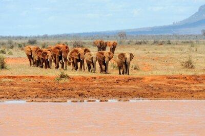 Poster Elefante, nacional, parque, kenya