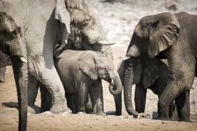 Poster Elefante no parque nacional de Etosha.