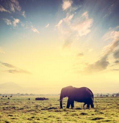 Poster Elefante no savana africano no por do sol. Safari em Amboseli, Quénia, África