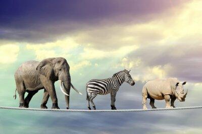 Poster Elefante, zebra, rinoceronte, andar, corda