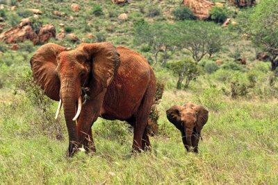 Poster Elefantes