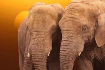 Poster Elefantes nascer do sol. Pares de elefantes juntos ao nascer do sol.