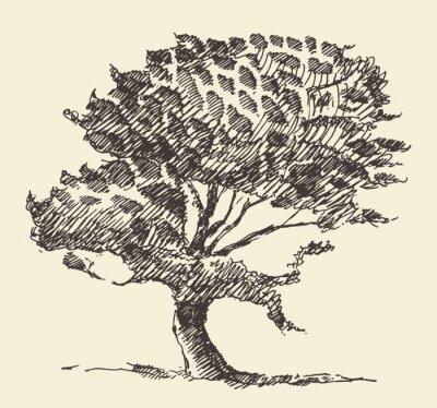 Poster Esboço desenhado mão da ilustração velha do vintage da árvore