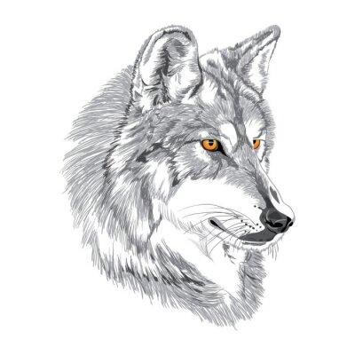 Poster Esboço focinho Lobo