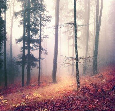 Poster Estação do outono Fundo da árvore cor floresta mágica com trajeto vermelho laranja brilhante. Floresta sazonal bonito.