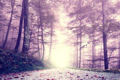 Poster Estrada de floresta nevoenta da cor roxa da fantasia. Paisagem sonhadora da floresta da cor do conto de fadas.