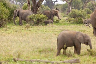 Poster Família do elefante em Kenya