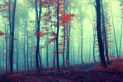 Poster Fantasia da floresta do outono do vintage