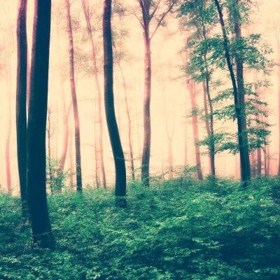 Poster Fantasia luz floresta cena