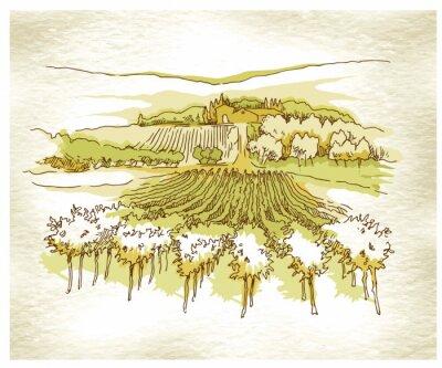 Poster Feitas à mão campos da uva esboço e vinhas.