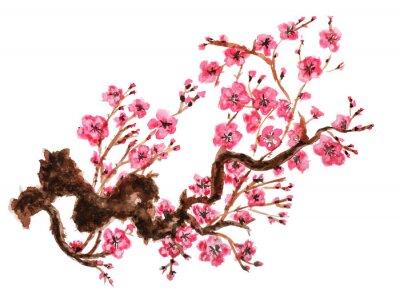 Poster Filial de florescência de sakura. Isolado no fundo branco