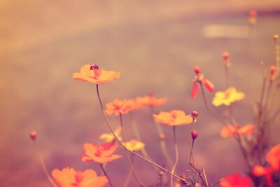 Poster flor