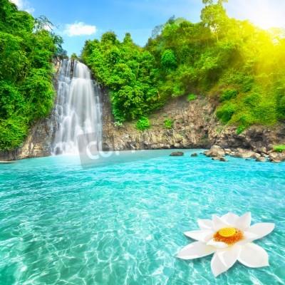 Poster Flor de lótus em cachoeira piscina