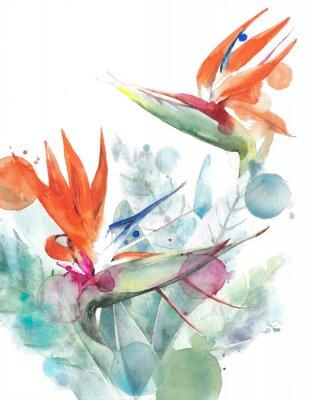 Poster Flores tropicais ave do paraíso strelitzia aquarela pintura ilustração isolado no fundo branco