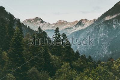 Poster Floresta de coníferas e montanhas paisagem viagem sereno paisagem verão verde