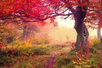 Poster floresta de outono