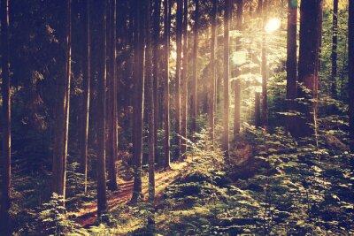 Poster Floresta sonhadora bonita