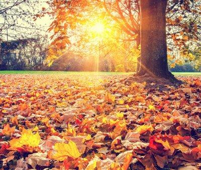 Poster Folhagem de outono ensolarado