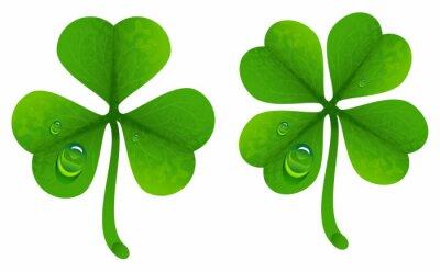 Poster Folhas de trevo com gotas de orvalho. Folha afortunada do trevo. Trevo de quatro folhas e trifoliado