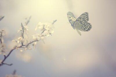 Poster Foto colorida Pastel da borboleta e flores da primavera