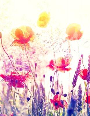 Poster Fundo abstrato da natureza turva, prado do verão no nascer do sol.