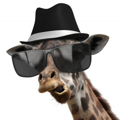 Poster Funny animal portrait of a giraffe with shades and fedora