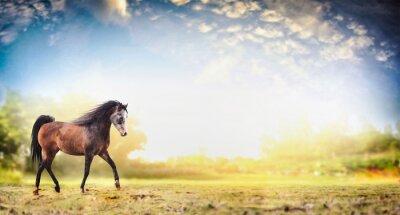 Poster Garanhão, cavalo, correndo, trote, natureza, fundo, bonito, céu, bandeira
