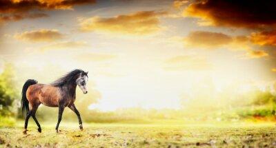 Poster Garanhão, cavalo, correndo, trote, Outono, natureza, fundo, bandeira