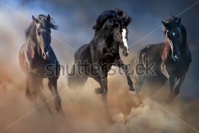 Poster Garanhões negros correm galopar na poeira do deserto contra o céu dramático
