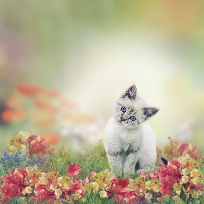 Poster Gatinho branco em flores