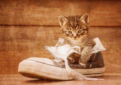 Poster Gatinho que senta em um sapato, imagem do vintage