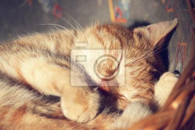 Poster gato dorme