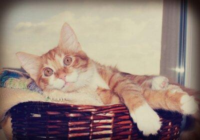 Poster Gato olhando