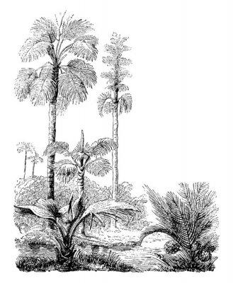 Poster Gebang and Nipa Palm Trees vintage illustration.
