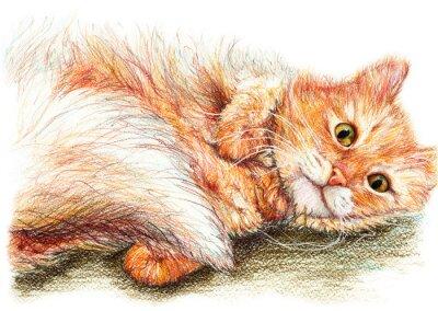 Poster Gengibre agradável bonito mão macia do gato tirada arte