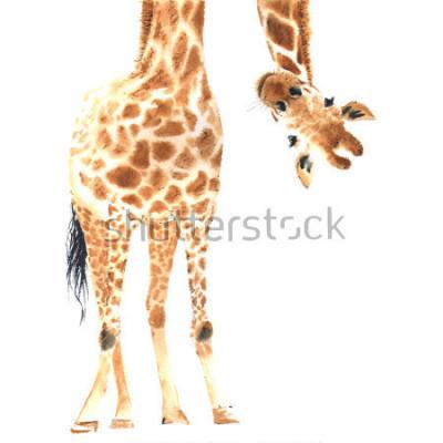 Poster Girafa em vez de em aquarela. Fechar-se. Mão ilustrações desenhadas
