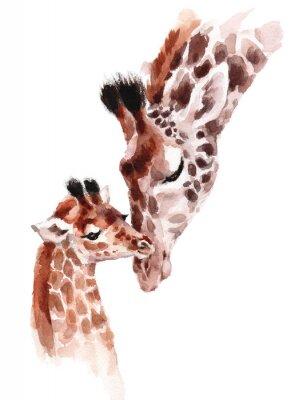 Poster Girafas mãe e bebê aquarela pintados à mão animal selvagem ilustração isolado no fundo branco