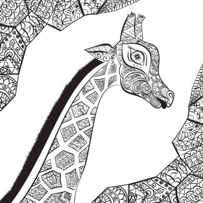 Poster Giraffe adulto bonito. Entregue a ilustração tirada do girafa ornamental. Isolado no fundo branco. A cabeça de uma girafa ornamental
