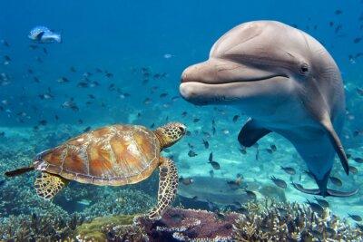 Poster Golfinho, tartaruga, submarinas, recife