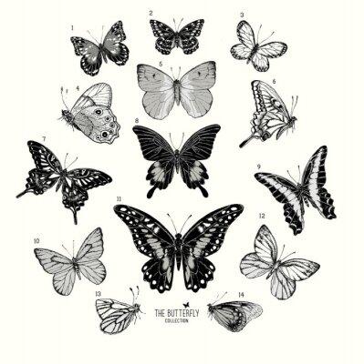 Poster Grande coleção de borboletas, conjunto desenhado mão isolated.Vector ilustração