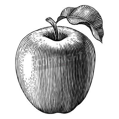 Poster Gravado ilustração de um Vector de maçã