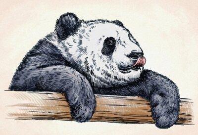 Poster Gravar tinta desenhar panda ilustração