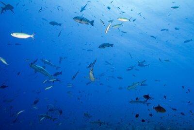 Poster Grey, tubarão, pronto, ataque, submarinas
