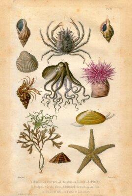 Poster Histoire naturel: Fond Marin