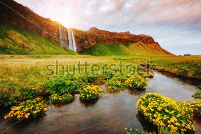 Poster Ideia bonita do campo verde de florescência na luz solar. Cena dramática e lindo. Atração turística popular. Cachoeira famosa de Seljalandsfoss do lugar do lugar, Islândia, Europa. Descubra o mundo lá